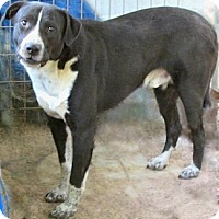 Adopt A Pet :: King - Tahlequah, OK