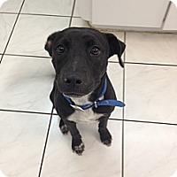 Adopt A Pet :: Mouse - Miami, FL