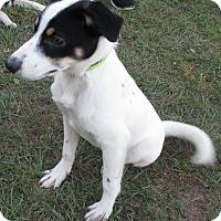 Adopt A Pet :: Gordon - Orange Park, FL