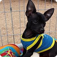 Adopt A Pet :: JERMAINE JACKSON - Scottsdale, AZ