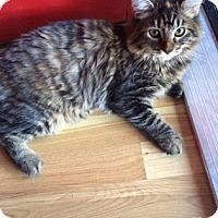 Adopt A Pet :: Anna - Tucson, AZ