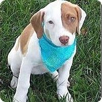 Adopt A Pet :: Shawna - Normandy, TN