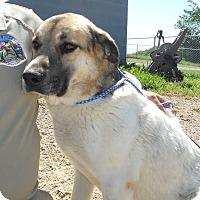Adopt A Pet :: Coty *Adopted - Tulsa, OK