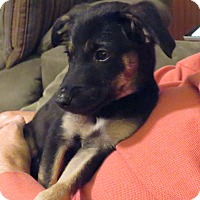 Adopt A Pet :: LINA - Middlesex, NJ
