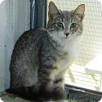 Adopt A Pet :: Baby (Jeannie's Kittens) - Medford, NJ