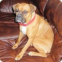 Adopt A Pet :: Caramel - Brentwood, TN