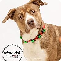 Adopt A Pet :: Cho Cho - Apache Junction, AZ