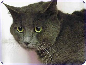 TONTO   Adopted Cat   581242   Marietta, GA   Russian Blue