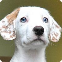 Adopt A Pet :: CLARK - Pine Grove, PA