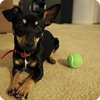 Adopt A Pet :: Salsa - Gainesville, FL