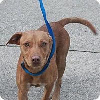 Adopt A Pet :: Tyra Collette - Jersey City, NJ