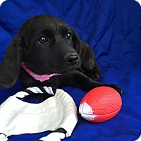 Adopt A Pet :: Morocco meet me 4/15 - Manchester, CT