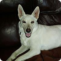Adopt A Pet :: Mila - Huntsville, AL