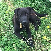 Adopt A Pet :: Sammy - Marietta, GA