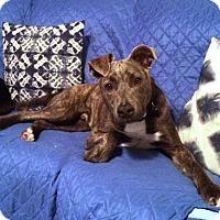 Adopt A Pet :: R's Chili Bean aka Jaxson - Las Vegas, NV