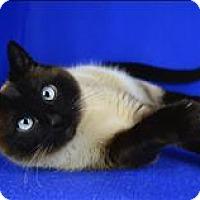 Adopt A Pet :: Sugar - Sherwood, OR