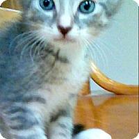 Adopt A Pet :: Jovial - Shippenville, PA
