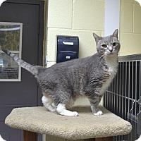 Adopt A Pet :: Lulu - Wheaton, IL