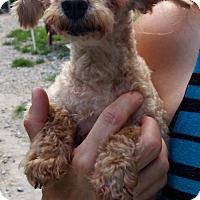 Adopt A Pet :: Chloe - Pembroke, GA