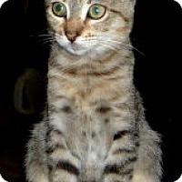 Adopt A Pet :: Chica - Dallas, TX