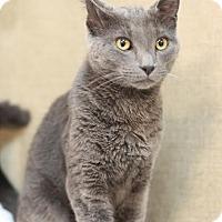 Adopt A Pet :: Mulder - Midland, MI