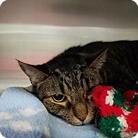 Adopt A Pet :: Reese - Elyria, OH