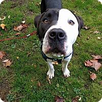 Adopt A Pet :: Jared - Pending - Sharon Center, OH