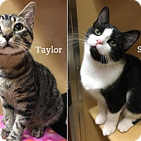 Adopt A Pet :: Taylor & Sydney - Oakville, ON