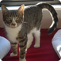Adopt A Pet :: Tiger - Manning, SC