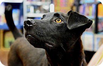 Labrador Retriever Mix Dog for adoption in Memphis, Tennessee - Reuben