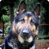 Adopt A Pet :: Kussen - McKenna, WA