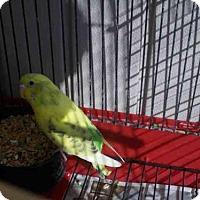 Adopt A Pet :: *TWEET - Upper Marlboro, MD