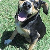 Adopt A Pet :: Parker - Austin, AR