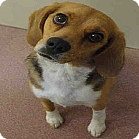 Adopt A Pet :: Rosie - North Ogden, UT