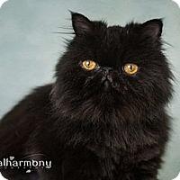 Adopt A Pet :: Izabelle - Phoenix, AZ
