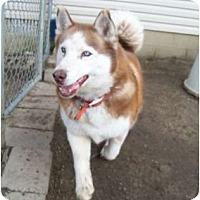 Adopt A Pet :: Charlie - Belleville, MI
