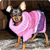 Adopt A Pet :: Clover - Scottsdale, AZ