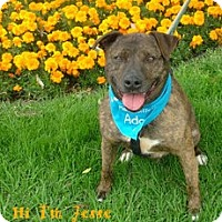 Adopt A Pet :: Jesse - Canoga Park, CA
