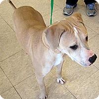 Adopt A Pet :: Zoey - Ludington, MI