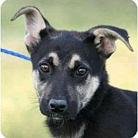 Adopt A Pet :: Miles-URGENT - kennebunkport, ME