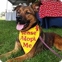 Adopt A Pet :: Pip - Louisville, KY
