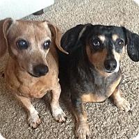 Adopt A Pet :: Cinnamon & Sammy-bonded pair - Santa Barbara, CA
