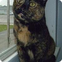 Adopt A Pet :: Nutmeg - Hamburg, NY