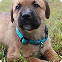 Adopt A Pet :: Gilroy - Waldorf, MD