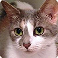 Adopt A Pet :: Juno - Durham, NC