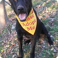 Adopt A Pet :: Chuck - Louisville, KY