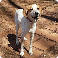 Adopt A Pet :: Frankie - Lawrenceville, GA