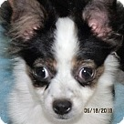 Adopt A Pet :: Clancy
