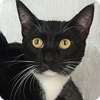 Adopt A Pet :: Mr. Purr - Tiburon, CA