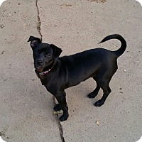 Adopt A Pet :: JOJO - Gustine, CA
